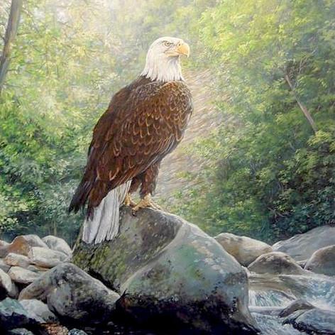 """""""Eagle Canyon"""""""