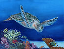 Sea Turtle FINAL.jpg