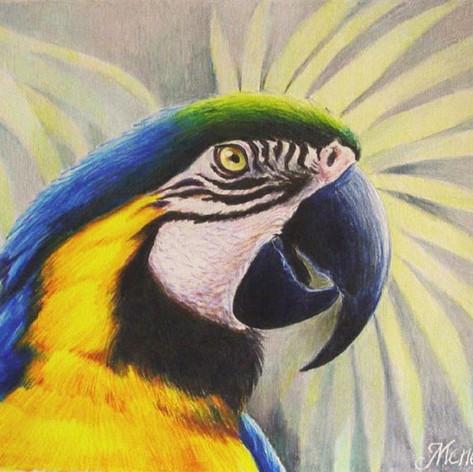 """Blue Macaw"""