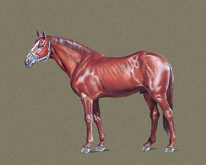 Horse_Full_01.jpg