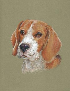 Beagle_01.jpg