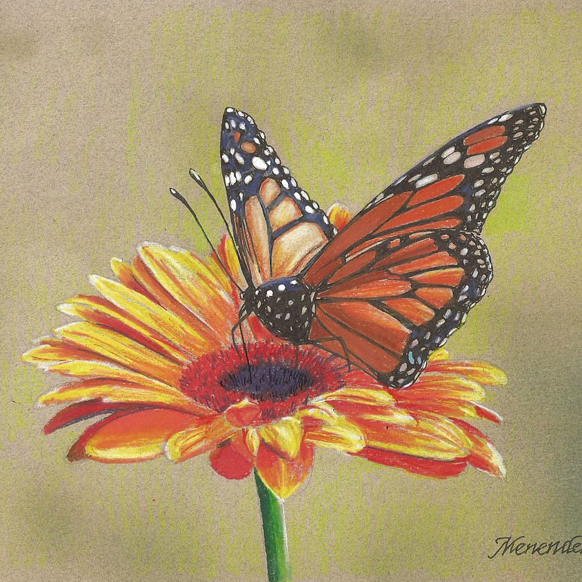 """ZOOM """"Monarch Butterfly"""" Color Pencil"""