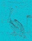 Pelican Paper.jpg