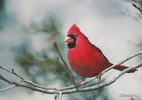 Cardinal_CP.jpg