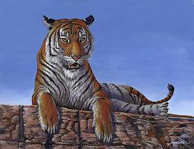 0608 Resting Tiger BEST.jpg