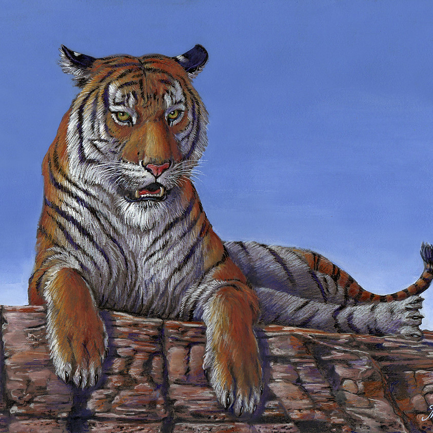 """Resting Tiger"" in Caran d'Ache Supracolor Watercolor Pencil"