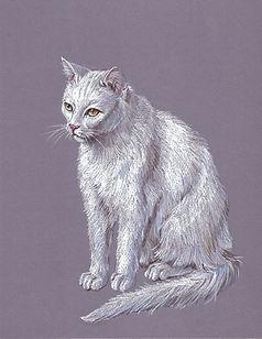 Cat04.jpg