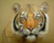 BengalTiger02.jpg