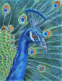 MENENDEZ Peacock copy.jpg