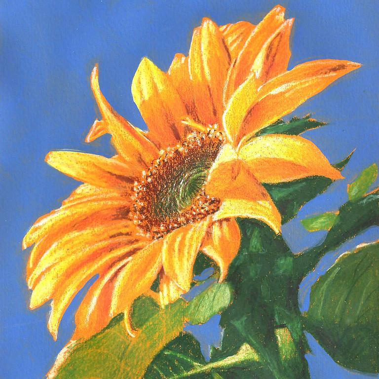 """Sunflower"" Color Pencil"