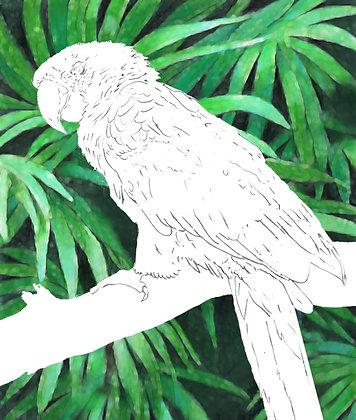 Jungle Macaw Paper