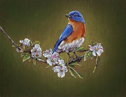 Bluebird Final copy.jpg