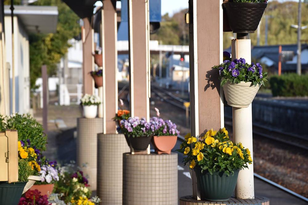 引田駅の花