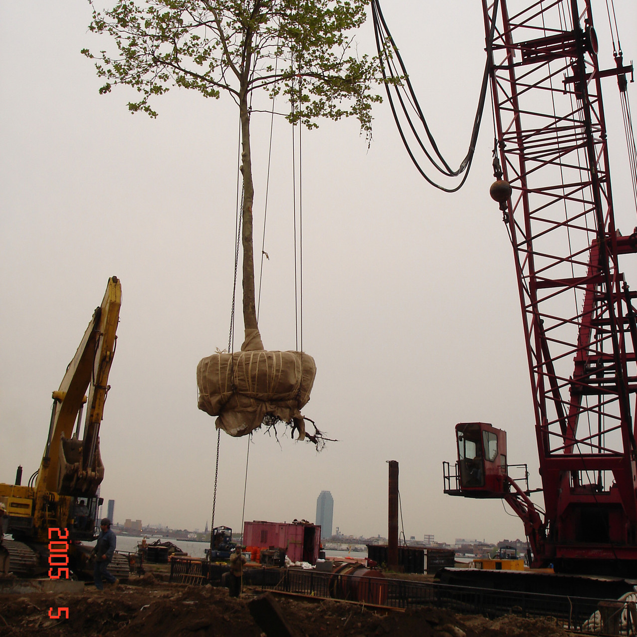 East River Transplant 3.JPG