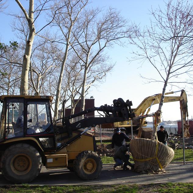 East River Transplant 2.JPG