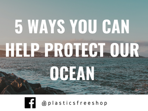 5 Ways YOU Can Help Protect Our Ocean