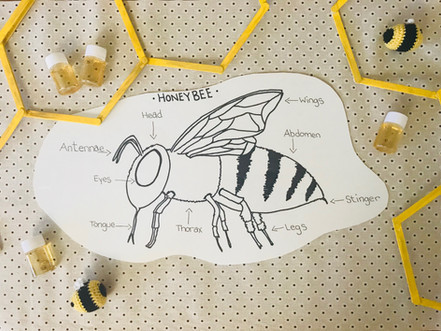 Learning about bees.