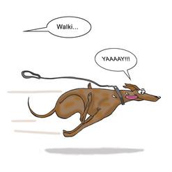 Greyhound Walkies.jpg