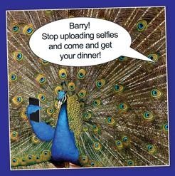 Selfies.jpg