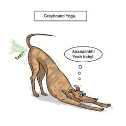 Greyhound Yoga.jpg