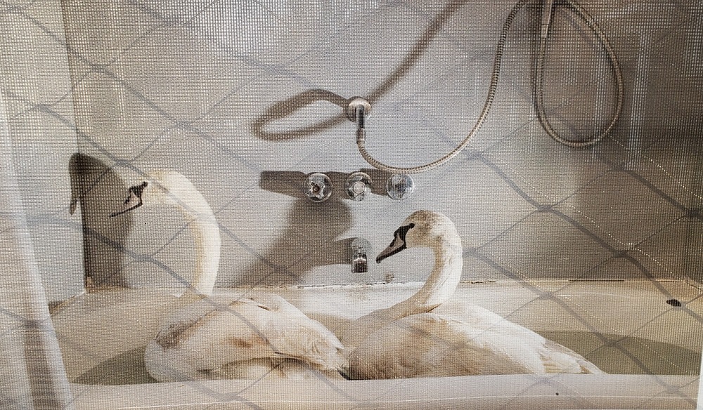 In a House of Harmony: Wildlife Rescue centers in New York by Napat Wesshasartar, part of the Photoville Fence project