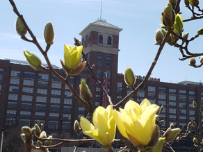 Spring on Atlanta BeltLine
