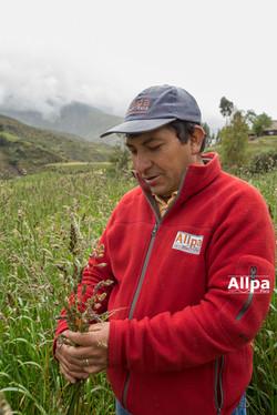 Andres Huerta, Allpa Perú