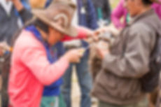 Sanidad animal, ganadería, ONG Allpa Perú
