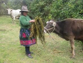 Innovación, Cambio y Desarrollo en el Mundo Rural Andino