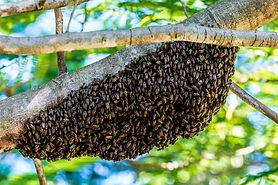 hiking-bees-365213__340.jpg