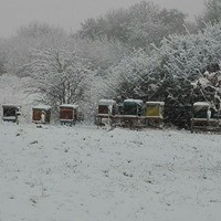 Que se passe t'il dans la ruche en hiver?