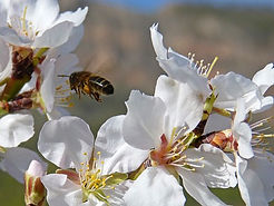bee-flight-1152110__340.jpg