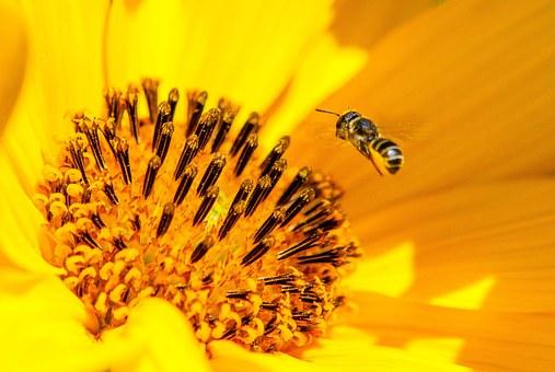 La fleur du soleil