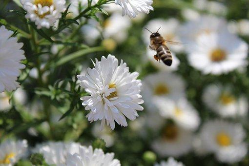 Une abeille en approche