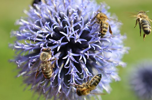 bees-53536__340
