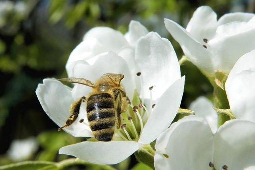 Le travail de l'abeille