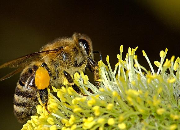20 000 abeilles parrainées