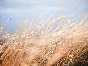 grain-field-1031573__340.jpg
