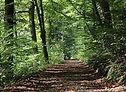 Une forêt constituée de plusieurs variétés d'arble permettant de faire du miel de foret.