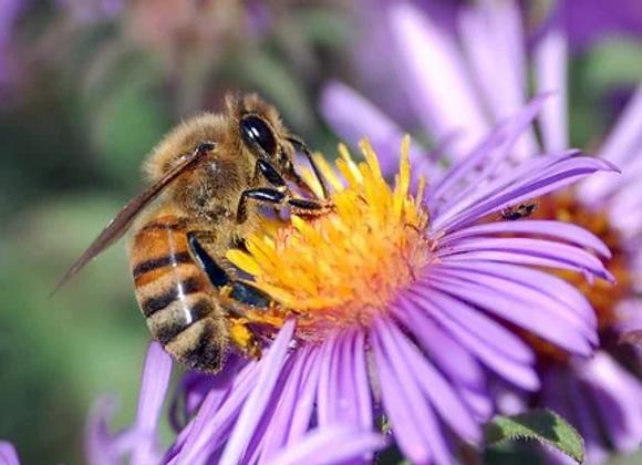 2 000 abeilles parrainées