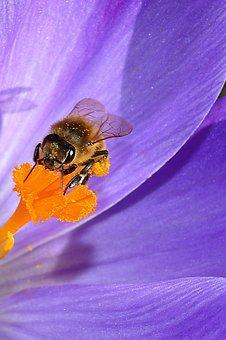 blossom-2089961__340