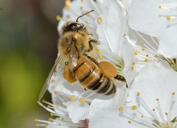 8000 abeilles parrainées