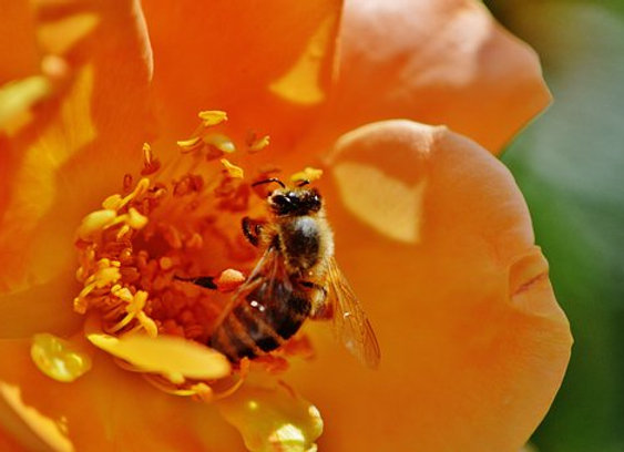 16 000 abeilles parrainées