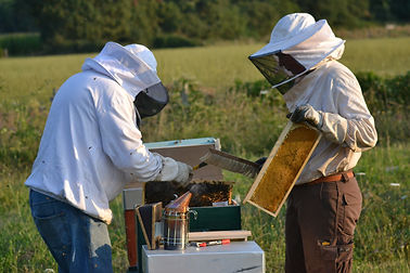 formation apiculture.JPG