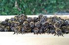 bees-957278__340.jpg
