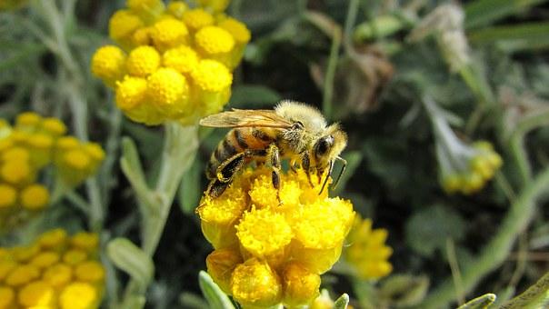 Une abeille posée sur une fleur
