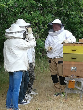 Stage apiculture.jpg