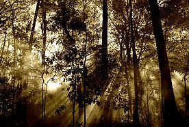 forest-67286__340.jpg