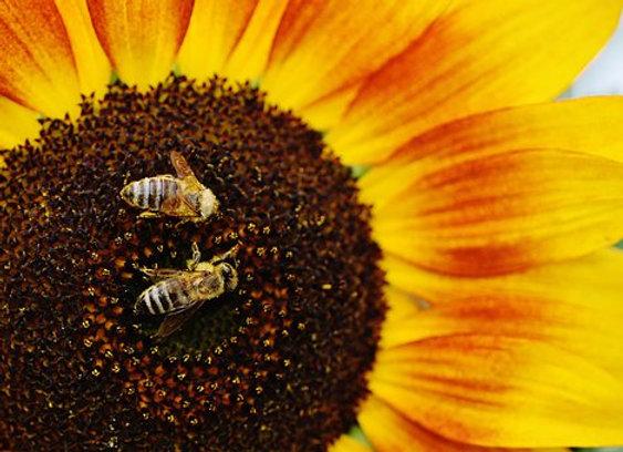 4 000 abeilles parrainées