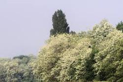 foret acacia